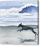 Italian Greyhound At The Beach Canvas Print