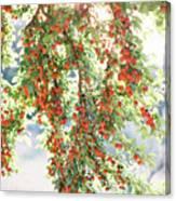 Italian Plum Tree Canvas Print