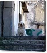Italy's Capri Doggie Canvas Print