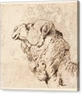 itle Head of a Dromedary Canvas Print