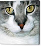 It's In The Cat Eyes Canvas Print
