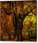 It's Not The Angel Oak Canvas Print