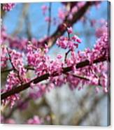 It's Spring 2016 Canvas Print