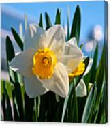 Its Spring Canvas Print
