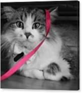 Itz A Cat Canvas Print