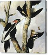 Ivory-billed Woodpeckers Canvas Print