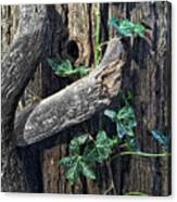 Ivy And Tree Canvas Print