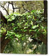 Ivy-covered Arch At The Alamo Canvas Print