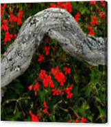 Ivy Geraniums And Log Canvas Print