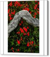 Ivy Geraniums And Log Poster Canvas Print
