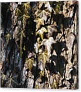 Ivy Leaves Grunge Tone Canvas Print