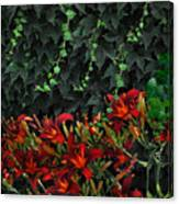 Ivy Over Canvas Print