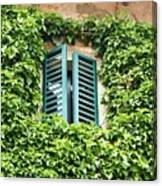 Ivy Shutters Canvas Print