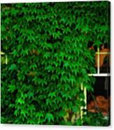 Ivy Window Canvas Print