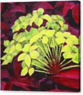 Ixora - Jungle Flame Canvas Print