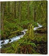 Lifeblood Of The Rainforest Canvas Print