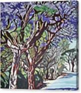 Jacaranda Road Canvas Print