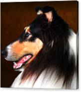 Black Jack- Collie Canvas Print