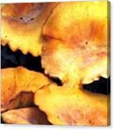 Jack O Lantern Mushrooms Canvas Print