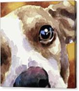 Jack Russel Terrier Canvas Print