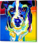 Jack Russell - Pistol Pete Canvas Print