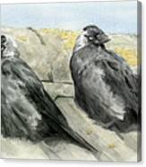 Jackdaws In The Sun Canvas Print