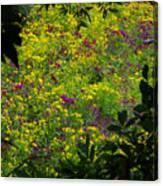 Jackson County Wildflowers Canvas Print