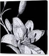 Jacqui's Lily Canvas Print