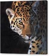Jaguar Portrait Canvas Print