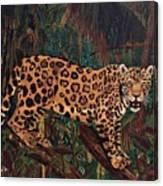 Jaguar's Domain Canvas Print