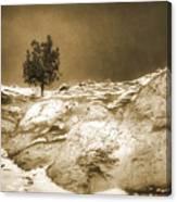 January 7 2010 Canvas Print