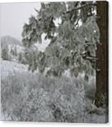 January On Kamiak Butte Canvas Print