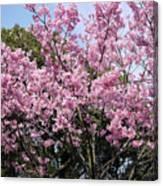 Japan Blossoms Canvas Print
