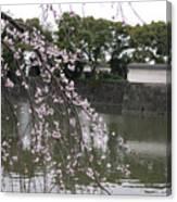 Japan Cherry Tree Blossom Canvas Print