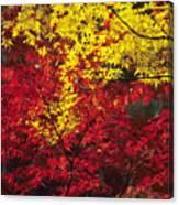 Japan Vibrant Leaves Canvas Print
