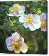 Japanese Anemone 4781 Idp_2 Canvas Print