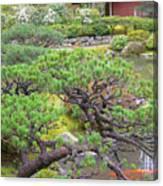 Japanese Elm Canvas Print
