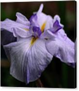 Japanese Iris In Bloom Canvas Print