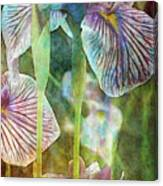 Japanese Iris Tall 2694 Idp_4 Canvas Print