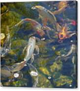 Japanese Koi Fish Canvas Print