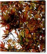Japanese Maple 2011-1 Canvas Print