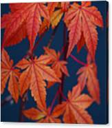 Japanese Maple Leaves In Autumn Canvas Print