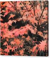 Japanese Maple - Nature Art Canvas Print