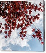 Japanese Maple Red Lace - Horizontal View Downwards Right Canvas Print