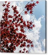 Japanese Maple Red Lace - Vertical Up Right Canvas Print