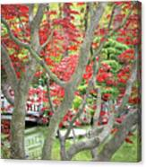Japanese Maple Tree And Pond Canvas Print