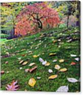 Japanese Maple Tree On A Mossy Slope Canvas Print