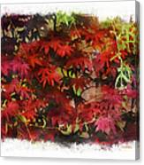 Japanese Maple Under The Willow Canvas Print
