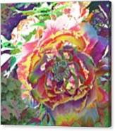 Japanese  Peony Canvas Print