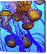Japanese Sea Nettles Canvas Print
